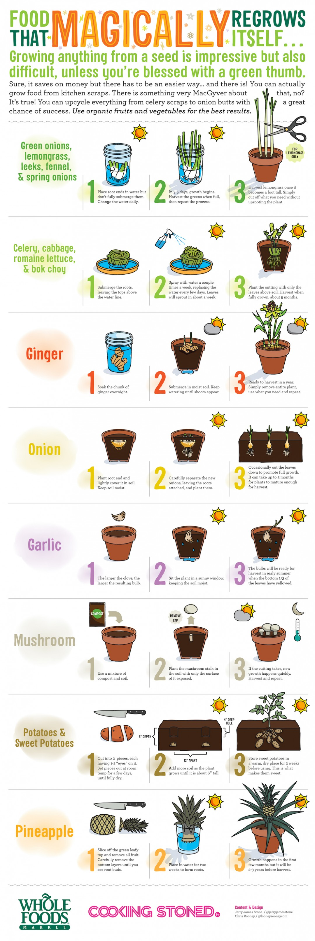 Waste Not – Want Not: Regrowing Food from Kitchen Scraps